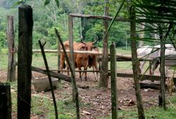 cow - blog